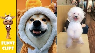 Funny Animals, try not to laugh, funny clips ep5