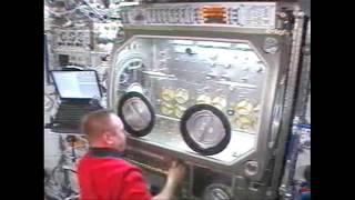 Microgravity Science Glovebox