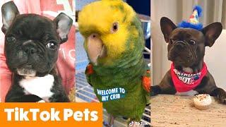 TikTok Pets Too Cute You'll Smile   Funny Pet Videos