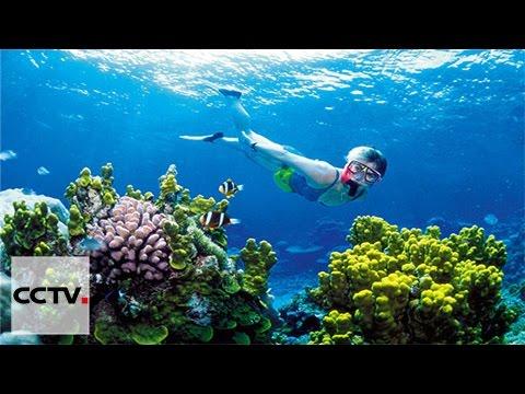 'Citizen scientists' help preserve ocean wildlife