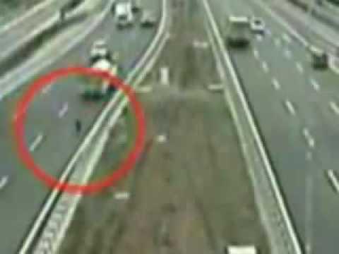 Un chien sauve un autre chien sur l'autoroute dans le trafic.