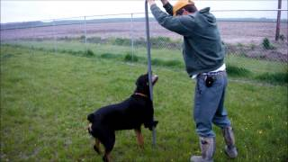 This Video Previously Contained A Copyrighted Audio Track. Due To A Claim By A Copyright Holder, The Audio Track Has Been Muted.     Pole-dancing Rottweiler