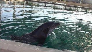 Dolphins at SeaWorld San Antonio