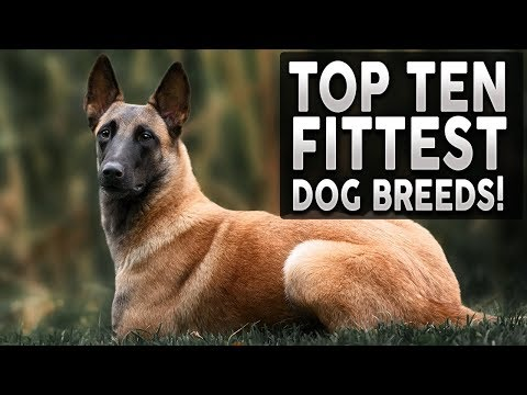 TOP 10 FITTEST DOG BREEDS IN THE WORLD!