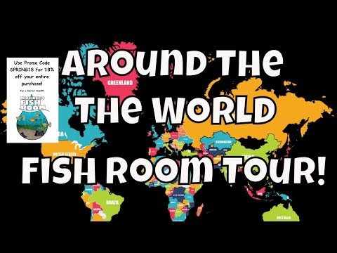 Around The World Fish Room Tour With Some Losses Fishroom VLOG