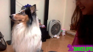 Dog Goes off In A Sulk ✯ Funny Dogs Compilation