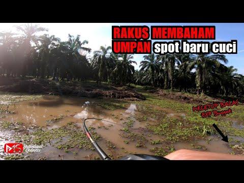 RAKUS MEMBAHAM UMPAN BUGGAK Spot Baru Cuci || Casting Ikan Haruan/ikan Gabus