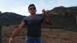REI DAS SERPENTES ELOGIOS DA DONA IRENE KKKKKKKKK