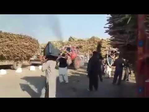 Full power of Belarus 510    Bailaras in Punjab Pakistan    sugarcane trolley in Pakistan