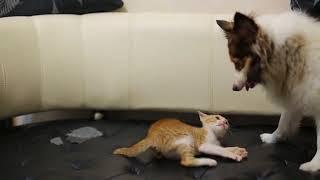 貓狗鬥一番