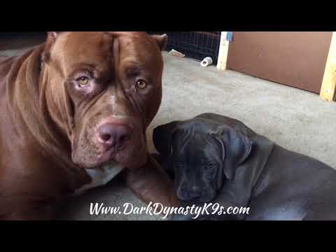 Hulk plays with his young son 'Kobe'