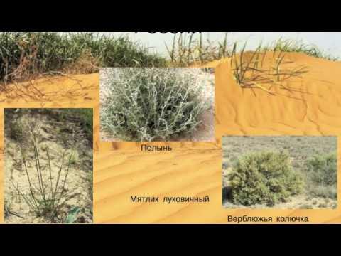 Растения Википедия