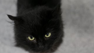 Why don't people want to adopt black cats?