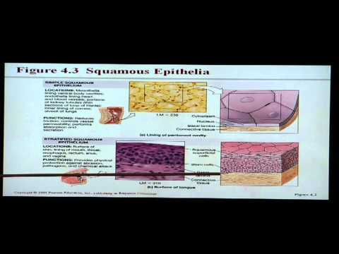 Anatomy and Physiology Help: Chapter 4 Tissues