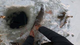 Рыбалка Налим в похолодание