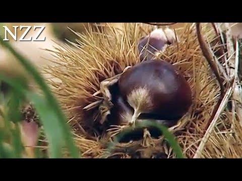 """Tessiner Geschichten - Best of """"NZZ Swiss made"""" -  Dokumentation von NZZ Format (2008)"""