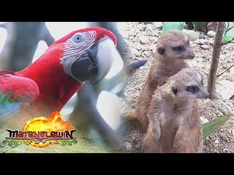 Matanglawin: Kuya Kim's trip to Cebu Safari and Adventure Park
