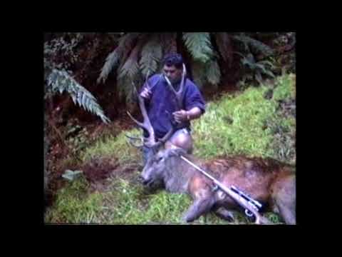 Hunting Fishing Diving And Cooking - I Hunt A 13 Point Red Stag Trophy