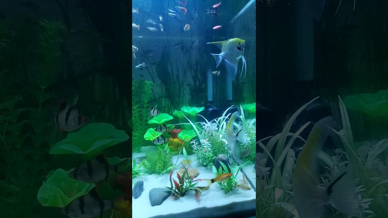 Bể cá với bố cục cây nhựa