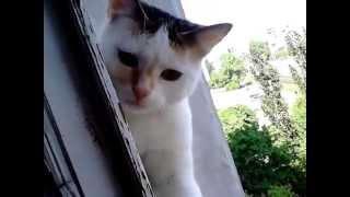Кошка на балконе без страха высоты - Гильза котенок 6 месяцев
