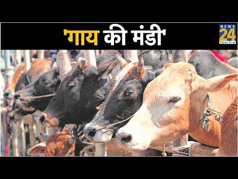 NNC : ऑपरेशन 'गाय की मंडी' - 'mob lynching' || Shamli ||