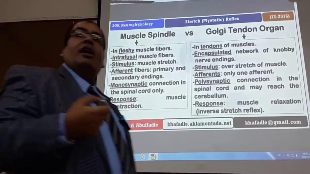 Golgi Tendon Organ Reflex, Inverse Stretch Reflex, (1-2017) by Dr ...