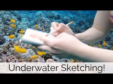 UNDERWATER SKETCHING - Coral Reefs, Hawaii, And Crown Of Thorns Starfish! VLOG3