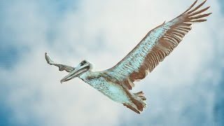 Painting of a pelican on photo of clouds