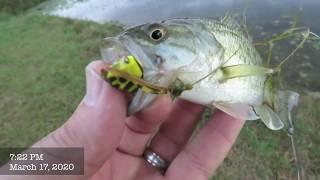 FishTales Fly Tying: Fly Froggy Fly!