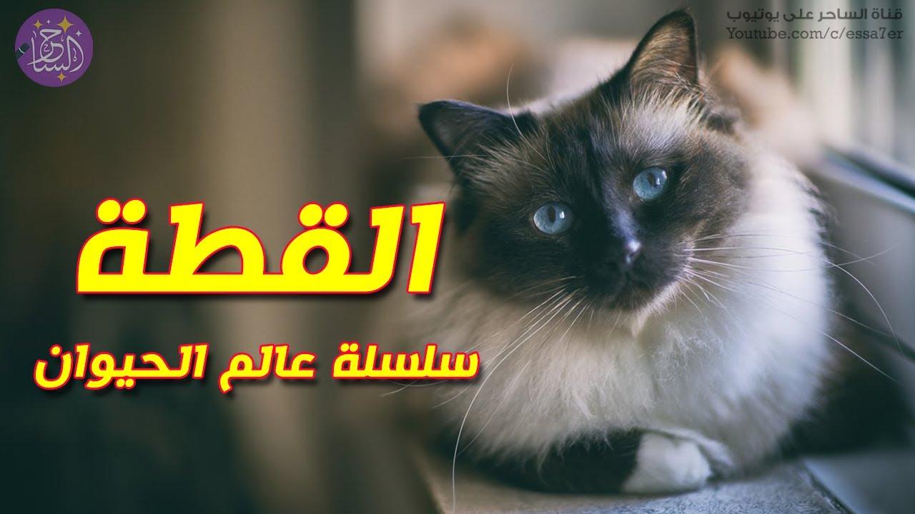 معلومات طريفة ومشوقة قد لا تعرفها عن عالم القطط ? سلسلة عالم الحيوان
