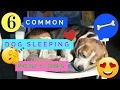 6 Dog Sleeping Positions