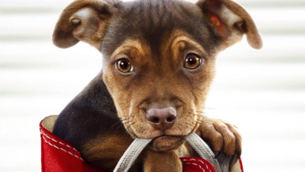 Egy kutya hazatér - magyar szinkronos előzezes #1 / Dráma