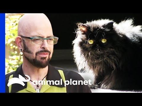 How Do You Like Meow: Baxter | My Cat From Hell