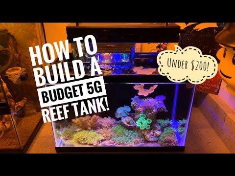 Walkthrough Of The Budget 5g Reef Tank Build