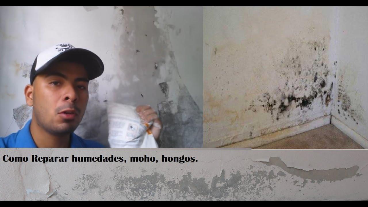 Como reparar una pared con humedad hongo y despu s pintar soluciones 3r youtube - Como pintar paredes con humedad ...