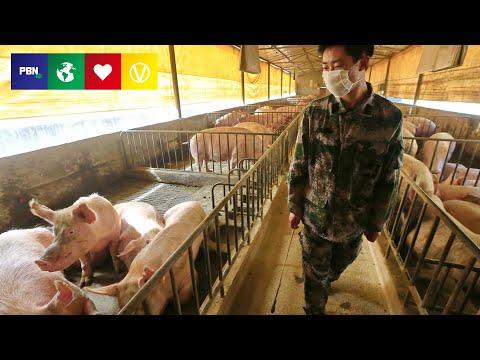 New Swine Flu Identified - With Pandemic Potential