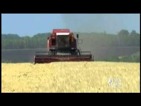 EU warns members of genetically modified wheat from U.S.