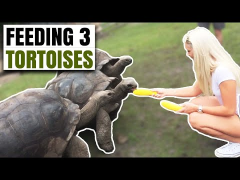 Andrea and Bret Visit the Tortoise Farm