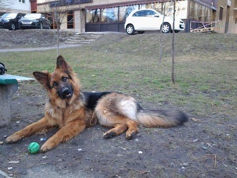 Как развивать игровую мотивацию у собаки?