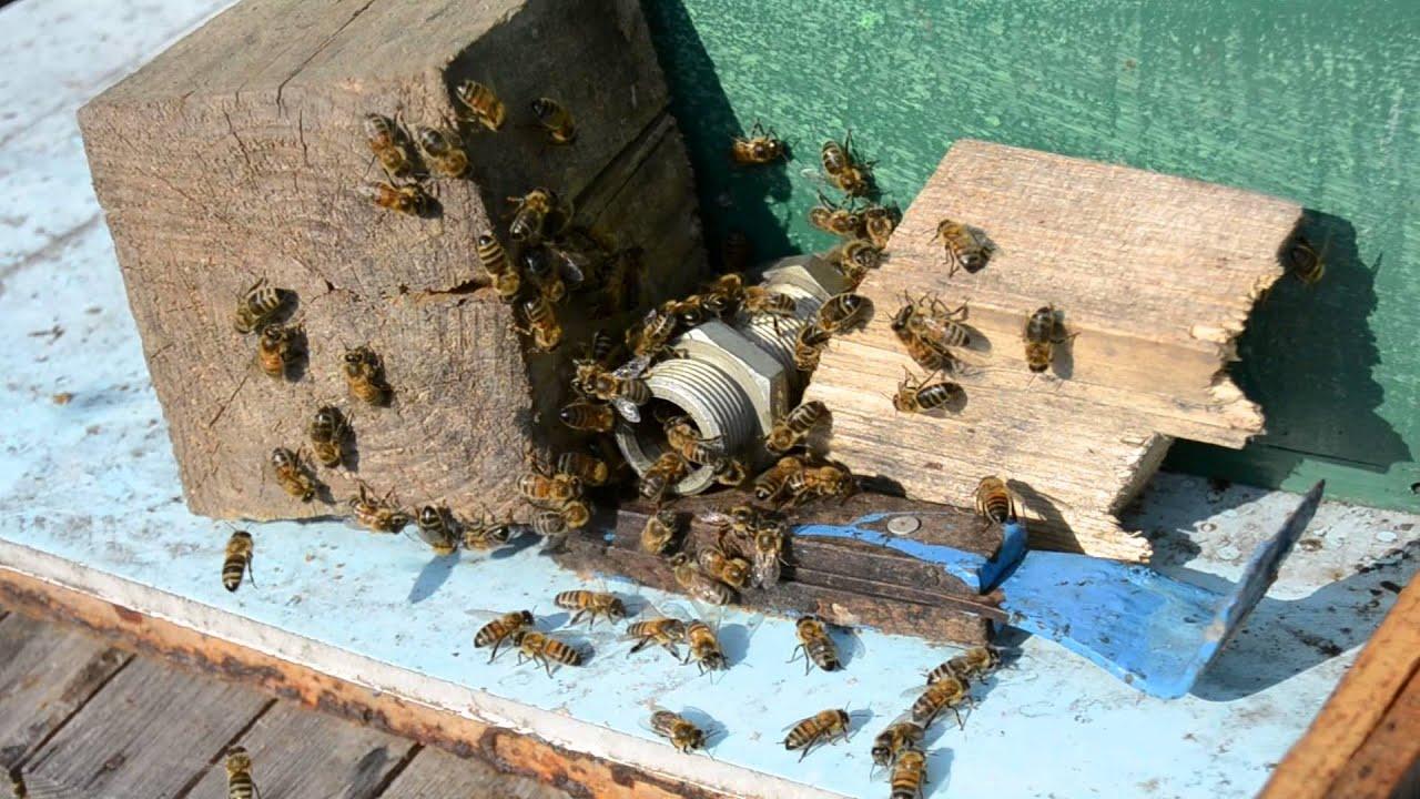 как сделать ловушку для пчел воровок