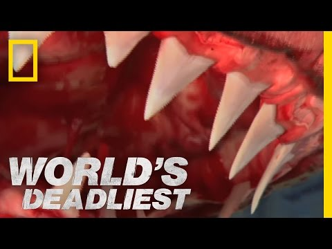 "Meet the Real ""Jaws"" 