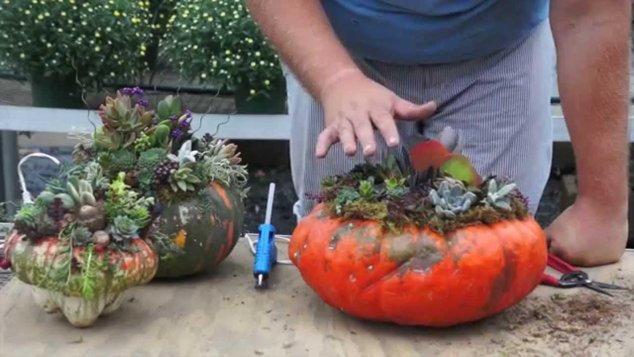 How To Make A Pumpkin Succulent Arrangement Youtube