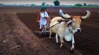 THE FARMER OF GUJARAT, BADHADA