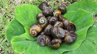 Primitive Technology -  find snails -Boiled in the clay eating delicious
