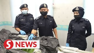 Duo nabbed for processing, selling ketum water in rented Johor house
