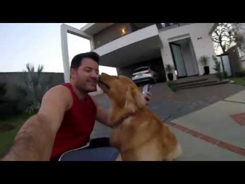 Bruce  GoPro Hero4 Session - Cachorro Golden Retriever