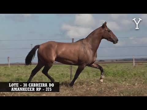 LOTE   30 CABREIRA DO AMANHECER RP   375