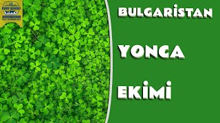 Bulgaristan'da yonca üretimini yerinde inceledik