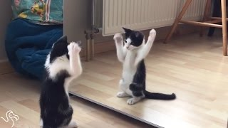 Kitten Sees Himself In The Mirror For The First | The Dodo