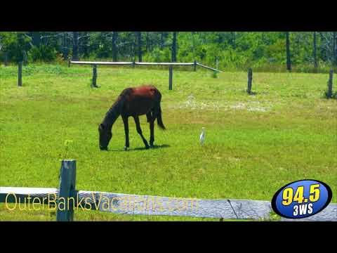 Jonny Hartwell - JONNY HARTWELL: Bob's Wild Horse Tour in The Outer Banks